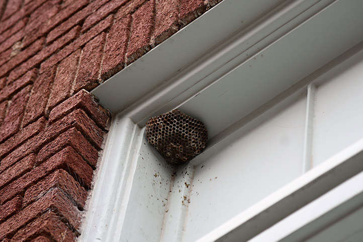 We provide a wasp nest removal service for domestic and commercial properties in Glasgow.